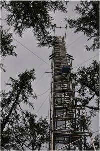 Climbing the instrumented flux measurement tower at the larch dominated site in Spasskaya Pad. Linus felt that it was quite windy at 32m…. Photo: G. Schaepman-Strub, July 2013.