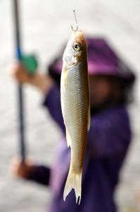 Fishing success in the Lena river (Photo: M. Schaepman, August 2013).