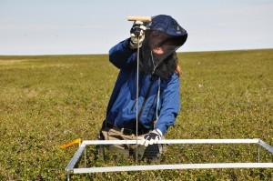 Inge Juszak, field work under any circumstances (Photo: G. Schaepman-Strub, July 2013).