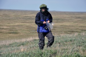 Olga Khitun, never resting to get all (!) species determined (Photo: G. Schaepman-Strub, July 2013).
