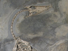 Paleontological Museum